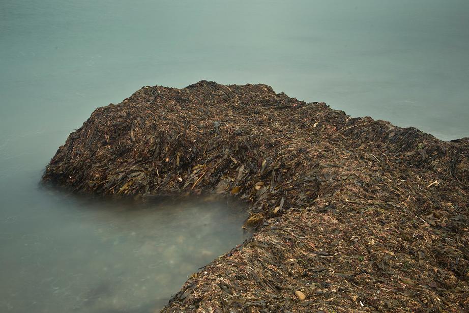 Seaweed_Peninsula